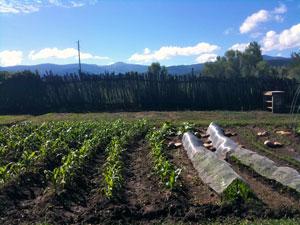 llano-small-corn-field
