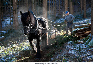 forest-worker-and-logging-horse-doing-forest-work-volders-tyrol-austria-er623n